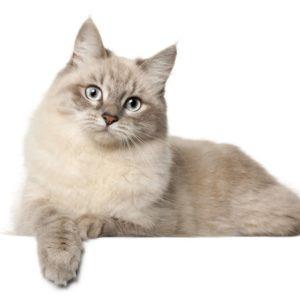 Les chats à l'adoption