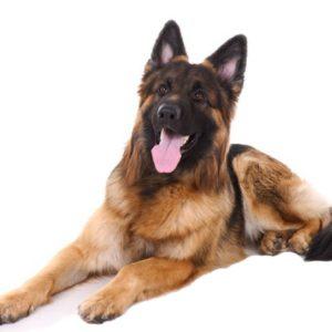Les chiens à l'adoption